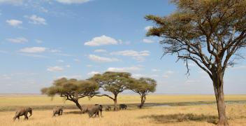 Prywatne safari po najpiękniejszych parkach narodowych Tanzanii