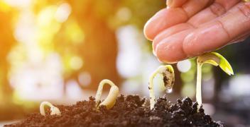 Jakość nasion – doradztwo dla rolników