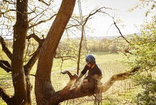 Metoda alpinistyczna w wycince drzew i podcinaniu gałęzi
