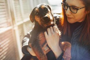 Adopcja psa lub kota za schroniska. Jak wygląda cały proces?