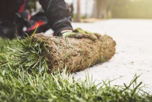 Trawa z rolki – wszystko, co warto wiedzieć na jej temat