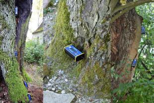 Testy obciążeniowe drzew – na czym polegają i po co są wykonywane?