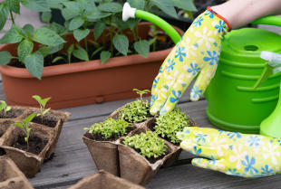 Środki ochrony roślin - jak wspomóc rozwój i ochronić roślinność w ogrodzie