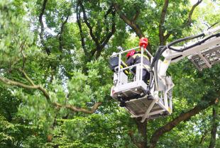 Wszystko to, co musisz wiedzieć o drzewach trudnych!