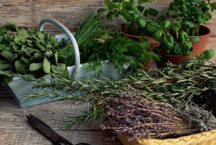Co warto wiedzieć o ziołolecznictwie?