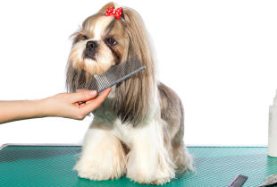 Pielęgnacja psów w salonie Cztery Łapy w Tuszynie