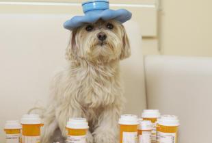 Jakiego rodzaju pasożyty występują u psów i jak sobie z nimi poradzić?