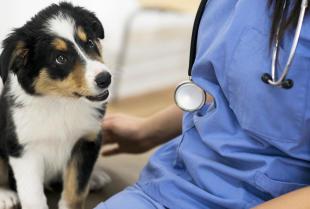 Jak przygotować psa na pierwszą wizytę w gabinecie weterynaryjnym?