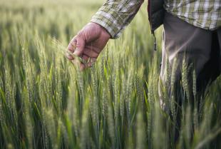 Wsparcie doradcze oferowane przez Przedsiębiorstwo Doradcze Agro-Complex dla gospodarstw rodzinnych i przedsiębiorstw rolnych