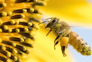 Sposoby na ratowanie pszczół według specjalistów z Bee True