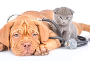 Jak często odrobaczać psa lub kota i po co?