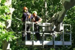 Jakie prace wchodzą w zakres profesjonalnych usług ogrodniczych?