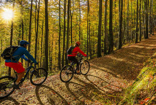 Najpopularniejsze typy rowerów – jak dobrać właściwy model?