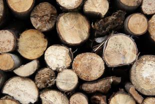 Drewno od sprawdzonego dostawcy
