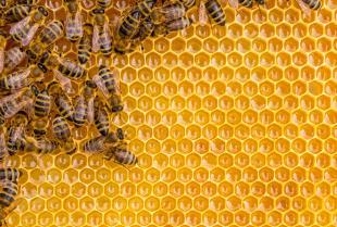 Niech przybywa nam pszczół