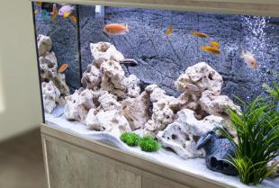 Sklepy internetowe zoologiczne – wygoda w robieniu zakupów