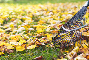 Kompleksowość na każdym kroku – usługi porządkowe w domu, pracy i ogrodzie.