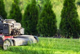 Trawnik idealny. Czyli jak odpowiednio o niego zadbać?