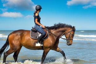 Podstawowe wyposażenie dla konia