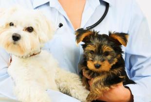 Diagnostyka zwierząt - co warto wiedzieć?