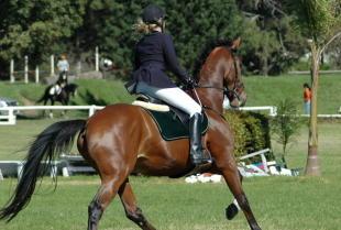 Czym powinna charakteryzować profesjonalna szkółka jeździecka?