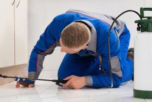 Jak bezpiecznie zwalczyć karaluchy w mieszkaniu?
