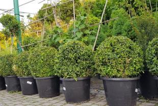 Jakie krzewy ozdobne będą najlepsze dla początkujących ogrodników?
