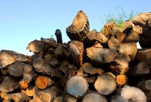 Drewno – rodzaje i zastosowania. Co wybrać do naszych potrzeb?