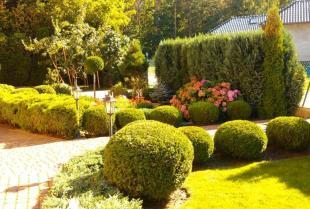 Jakie iglaki do ogrodu wybrać?
