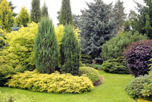 Ogrody z iglakami – dlaczego warto je zakładać?