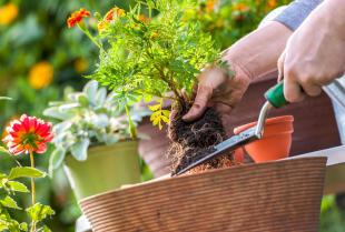 Ogród - miejsce dla kochających rośliny