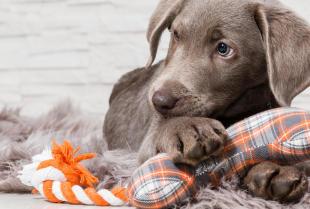 Niezbędne akcesoria dla młodego psa