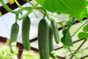 Dlaczego warto kupować warzywa z ekologicznych upraw?
