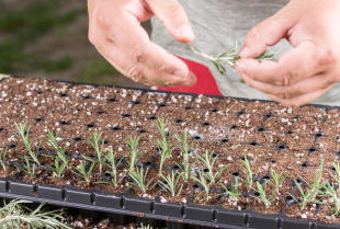 Wysiew nasion na paletach. Na czym to polega?