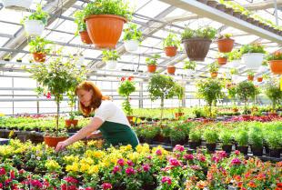 Jak uprawiać rośliny, które lubią wilgoć?