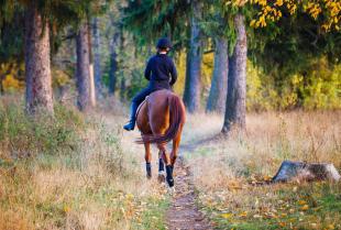 Dlaczego warto nauczyć się jeździć konno?