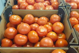 Jakie odmiany pomidorów są najchętniej wybierane przez klientów?