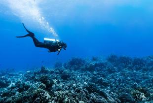 Jak rozpocząć przygodę z nurkowaniem?