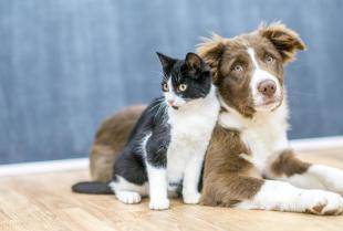 Dlaczego warto poddawać kastracji psy i koty?