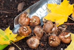 Jakie rośliny zasadzić w jesiennym ogrodzie?