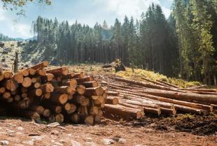 Tarcica, czyli główny surowiec przemysłu drzewnego. Jak powstaje i do czego się ją wykorzystuje?