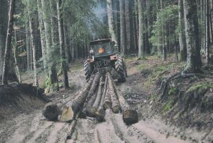 Jaki ciągnik wybrać do pracy w lesie?