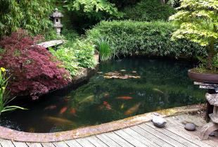 Czym należy zająć się planując budowę oczka wodnego w ogrodzie?