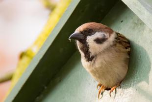 Jak wybrać budki lęgowe dla ptaków?
