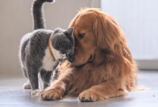 Zdrowy kot, zdrowy pies - tylko szczepienia mogą pomóc