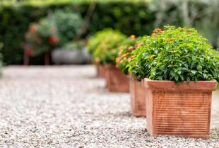 Usługi ogrodnicze dla deweloperów i wspólnot – co powinny obejmować?