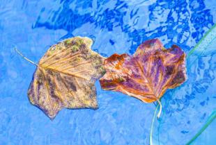 Jak dbać o czystość wody w przydomowym basenie?