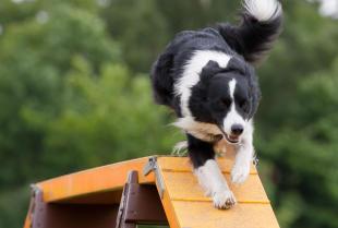 Dlaczego warto zdecydować się na szkolenie psa?