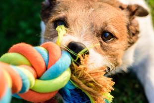 Problemy z niesubordynacją u psa - przyczyny i sposoby radzenia sobie z nimi.