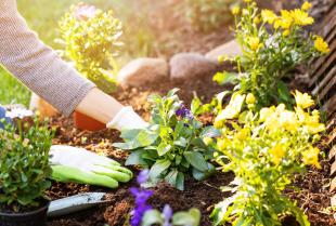 Kiedy zainwestować w ogród?